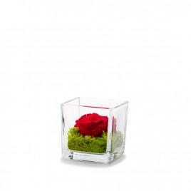 Verrine Genova 8 Rouge