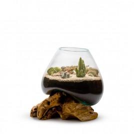 Amazonia Cactus XL