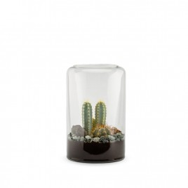 Mia M Cactus