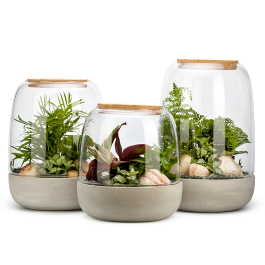 Collection Terrarium